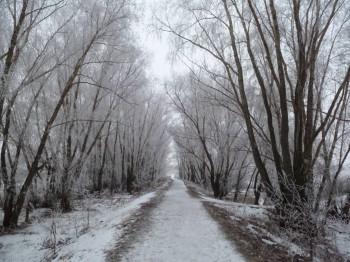 А снег идёт... - P1010625.JPG