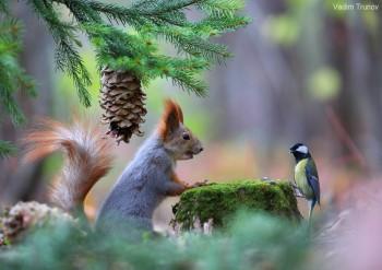 Cмешное из жизни животных. Фото и видео из интернета. - bSwpx5NDhjA.jpg