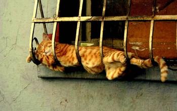 Cмешное из жизни животных. Фото и видео из интернета. - kgOjcOV2vjs.jpg