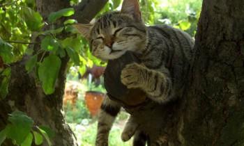 Cмешное из жизни животных. Фото и видео из интернета. - gzZVtWgNMBM.jpg