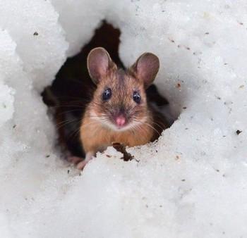 В мире животных фото, видео  - I9e3L6Ao16g.jpg