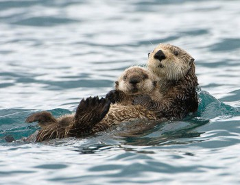 В мире животных фото, видео  - qhsIgruGf4E.jpg
