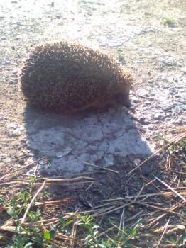 В мире животных фото, видео  - Фото0136.jpg