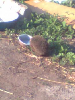 В мире животных фото, видео  - Фото0139.jpg