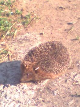 В мире животных фото, видео  - Фото0138.jpg