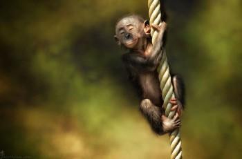 В мире животных фото, видео  - 2.jpg