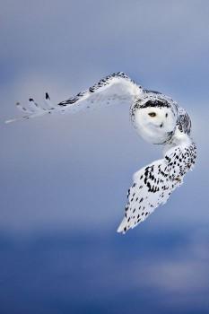 В мире животных фото, видео  - 3.jpg