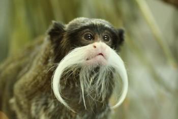 В мире животных фото, видео  - 5.jpg