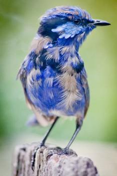 В мире животных фото, видео  - 8.jpg