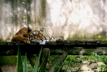 В мире животных фото, видео  - 4.jpg