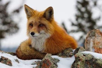 В мире животных фото, видео  - 6.jpg