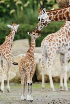 В мире животных фото, видео  - 7.jpg