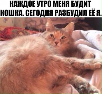 Cмешное из жизни животных. Фото и видео из интернета. - IMG_4510.JPG
