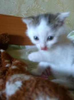 Какую кличку выбрать для кота? - GMESRaTqC58.jpg