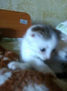 Какую кличку выбрать для кота? - l8xF_uwY3vs.jpg