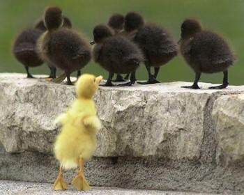 Cмешное из жизни животных. Фото и видео из интернета. - XdQDZlwkZy4.jpg
