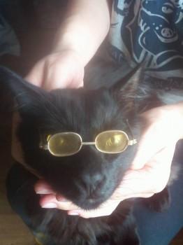 Моему Федюше очки идут примерно так же, как мне  - IMG_20171130_142508.jpg