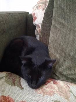 Дочкин котя ждёт ее,любимую, с работы  - IMG_20180516_140234.jpg
