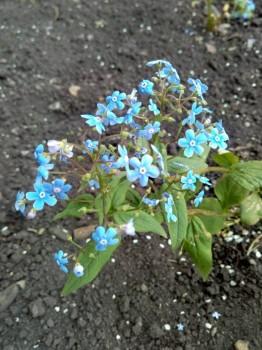 Декоративные садовые растения. - IMG_20180611_120216.jpg