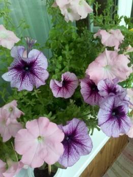 Мои комнатные растения. - IMG_20180928_102914.jpg
