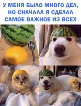 Из ВКонтактика с приветиком  - 1543502545.jpg