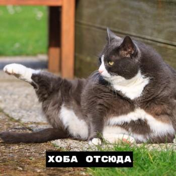 Из ВКонтактика с приветиком  - 1563957320.jpg