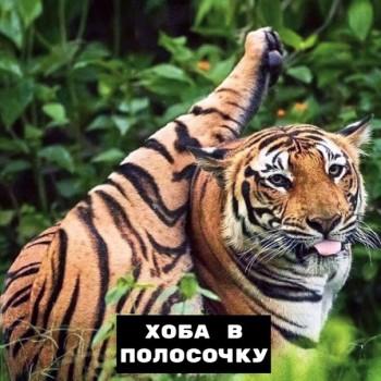 Из ВКонтактика с приветиком  - 1563957298.jpg