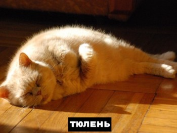 Из ВКонтактика с приветиком  - 1568834450.jpg