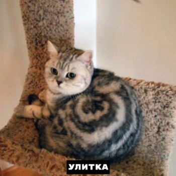 Из ВКонтактика с приветиком  - 1568834446.jpg