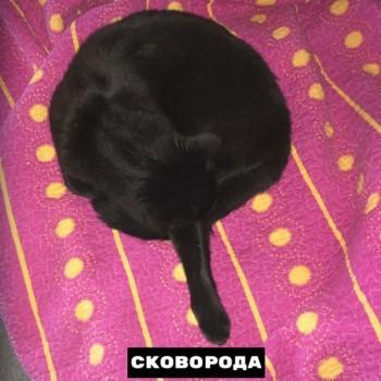 Из ВКонтактика с приветиком  - 1568834439.jpg