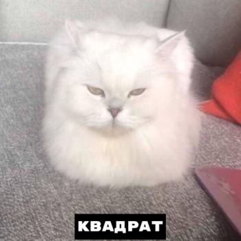 Из ВКонтактика с приветиком  - 1568834437.jpg