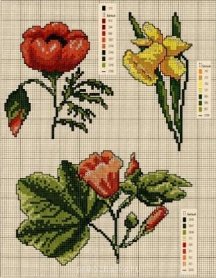 Цветы. Схемы вышивки - 1280153464_cveti_3.jpg